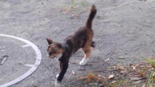 ④三毛子猫(保護済み)