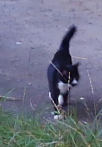 ⑤黒白子猫(保護済み)2