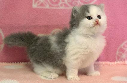 仔猫の画像更新いたしました。