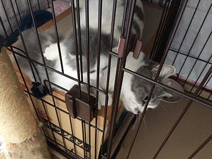 仔猫、産箱の上に登る