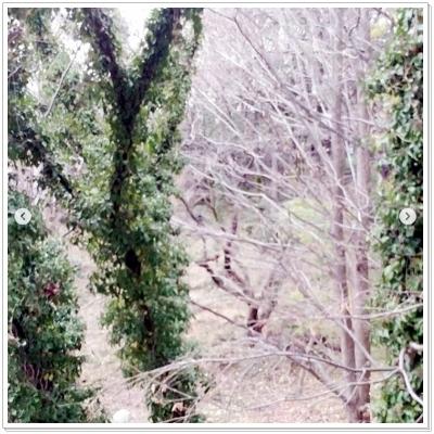 insta20200127-3.jpg