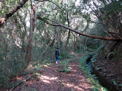 210127-12=ぷゅ,歩きtoONA温泉 a用水道倒木下