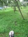 s-草刈り707リンゴ園