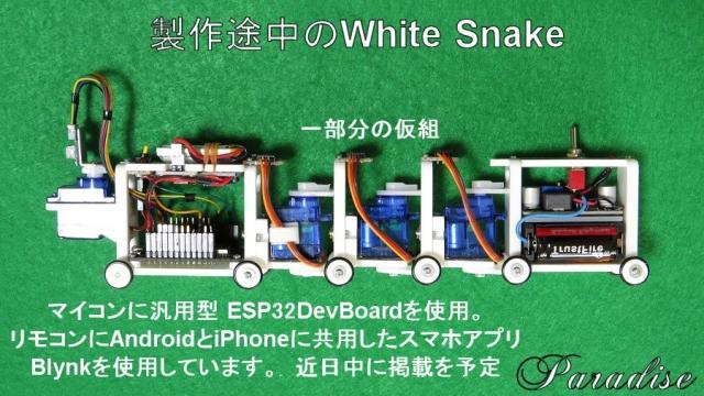 WhiteSnake1.jpg
