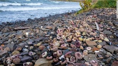 aarussia-toxic-spill-marine-life-exlarge-169.jpg
