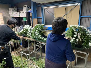 謹賀新年 正月 葬儀 花祭壇 家族葬 小規模葬 コロナ禍 ソーシャルディスタンス 三密 医療崩壊