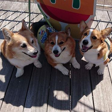 3コギ笑顔