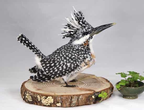 野鳥販売-2
