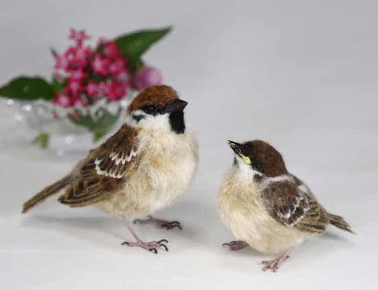 野鳥販売-3