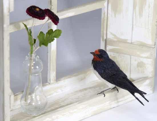 野鳥販売-5