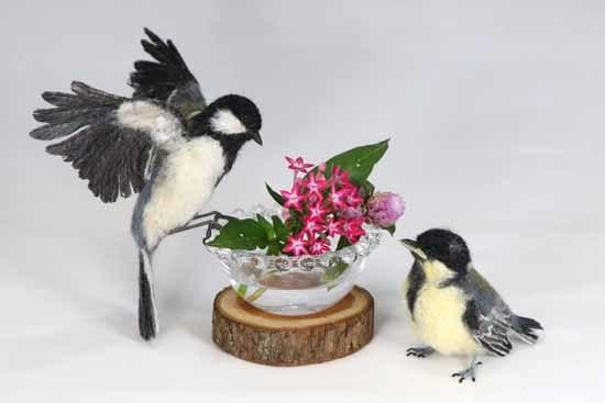野鳥販売-6