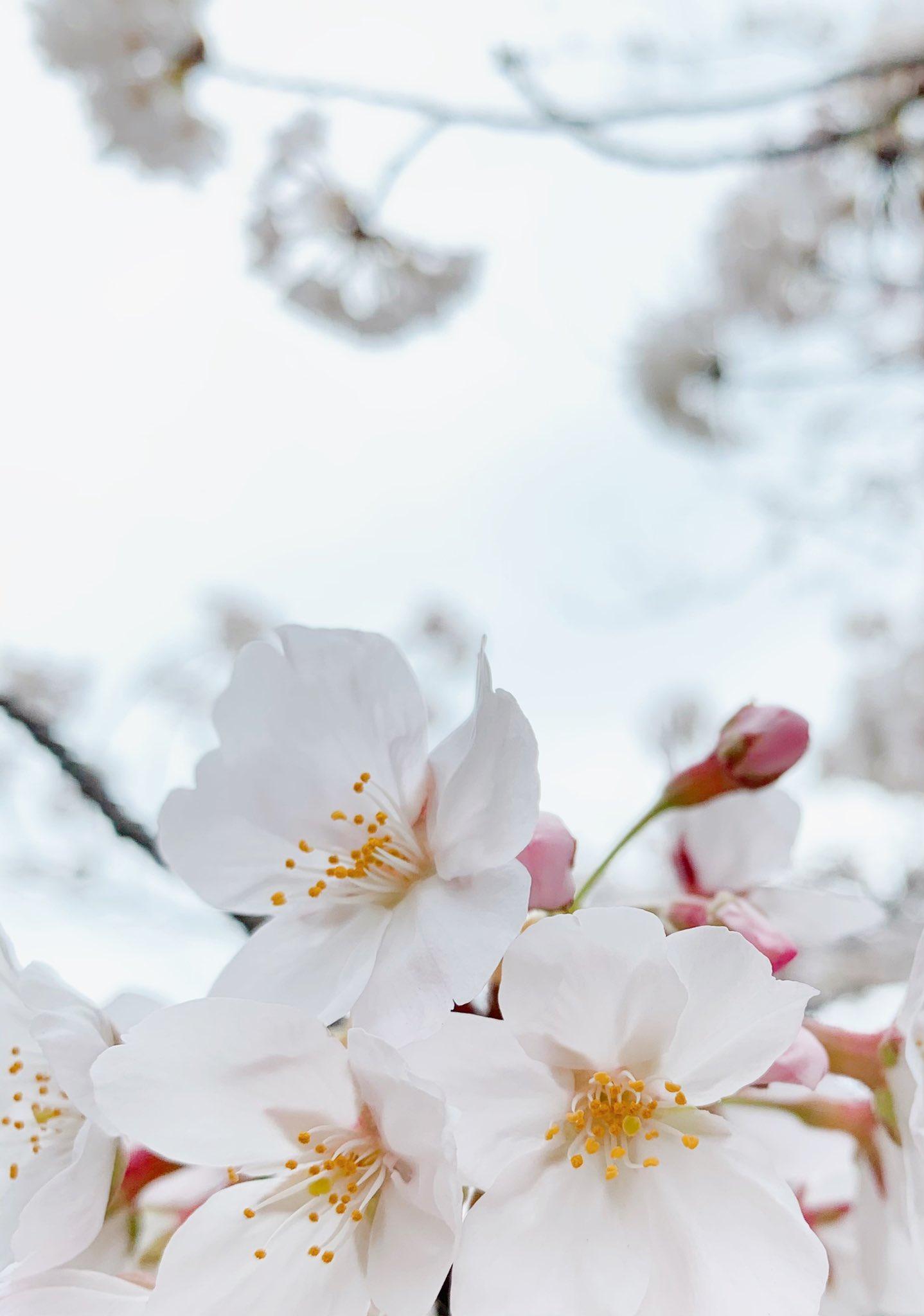 2021桜-07
