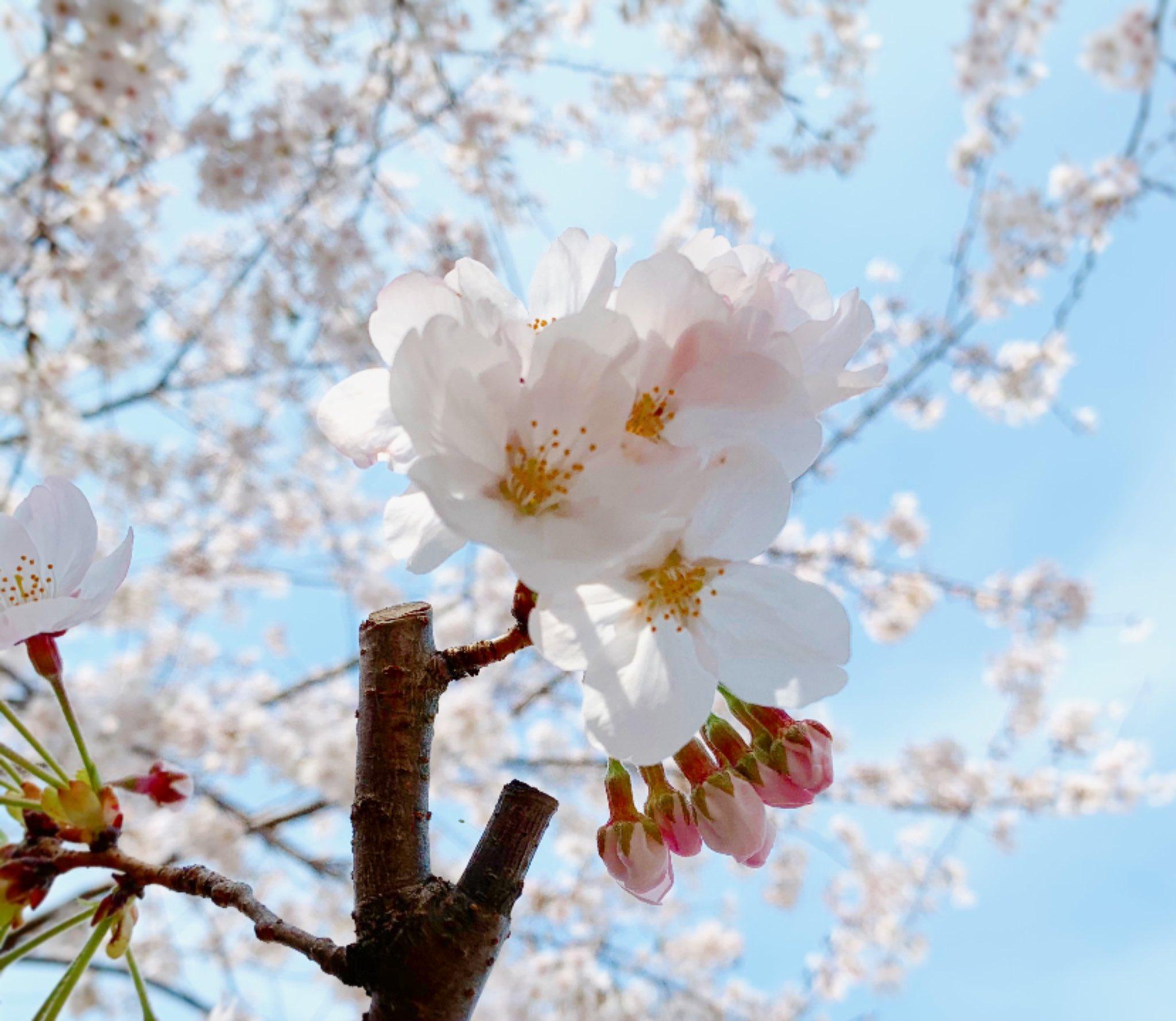 2021桜-09