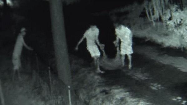栃木で子牛窃盗、群馬県では子豚など670頭盗まれる被害