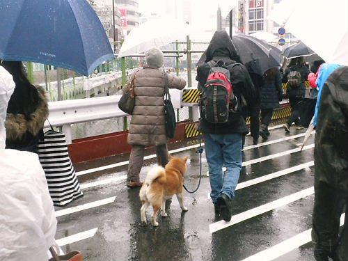 20120120新宿「第3回花王抗議デモ」