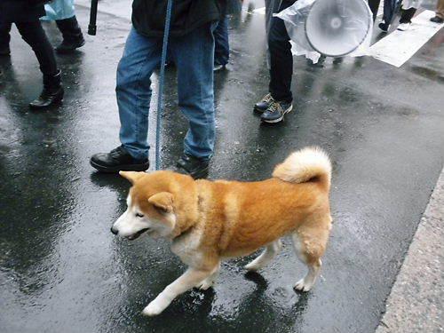 20120121第二回電通・朝日新聞抗議デモ