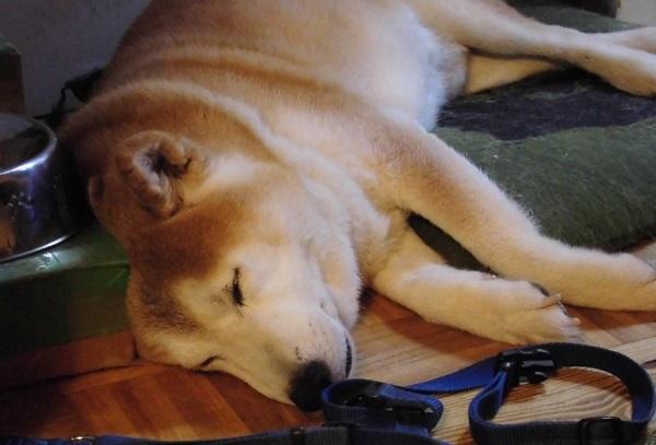 20210324訃報・愛国犬の五十六とパパの津崎尚道さん逝去・川崎国や日本の改善を目指す戦いの意志を受け継ごう