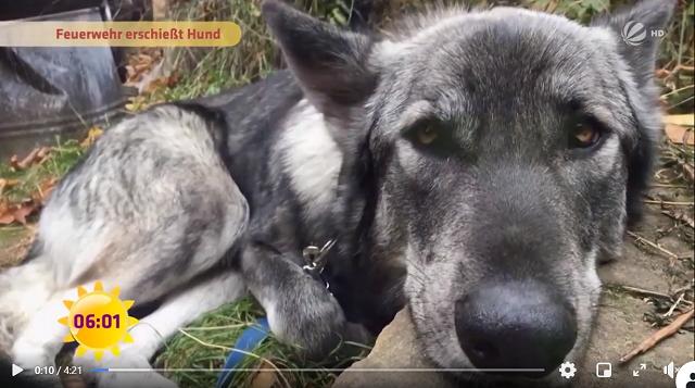 ドイツ 消防署 犬 射殺