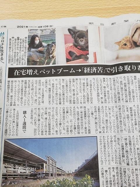 朝日新聞 捏造記事1
