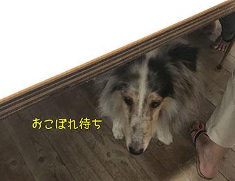 IMG_4219.jpg