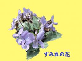 タイトルなしコスミレ5481 -291KB - コピー