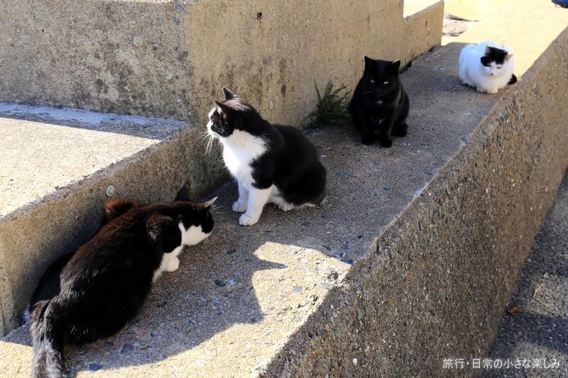 猫の島 相島 福岡