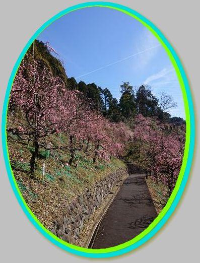 梅の道-1
