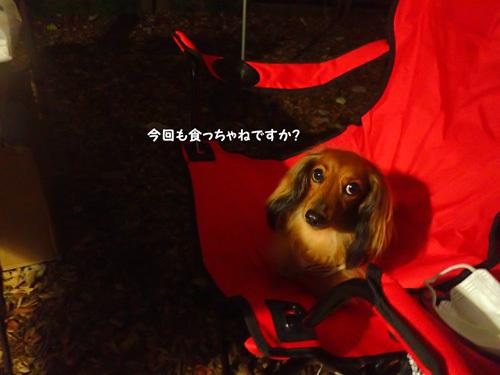 dogsite21.jpg