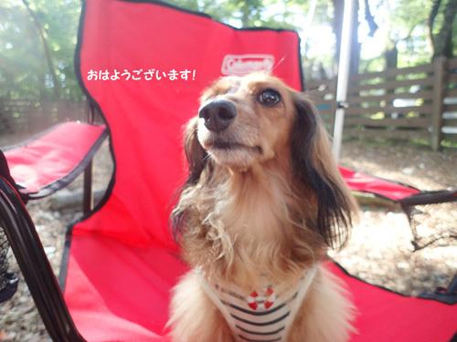 dogsite24.jpg