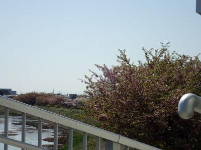 kawasakura1.jpg