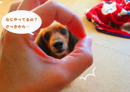 wakka5.jpg