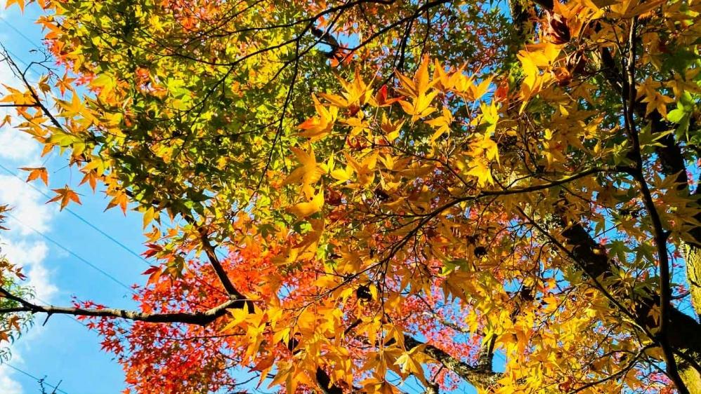 秋の宇治旅-19