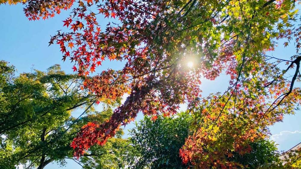 秋の宇治旅-9
