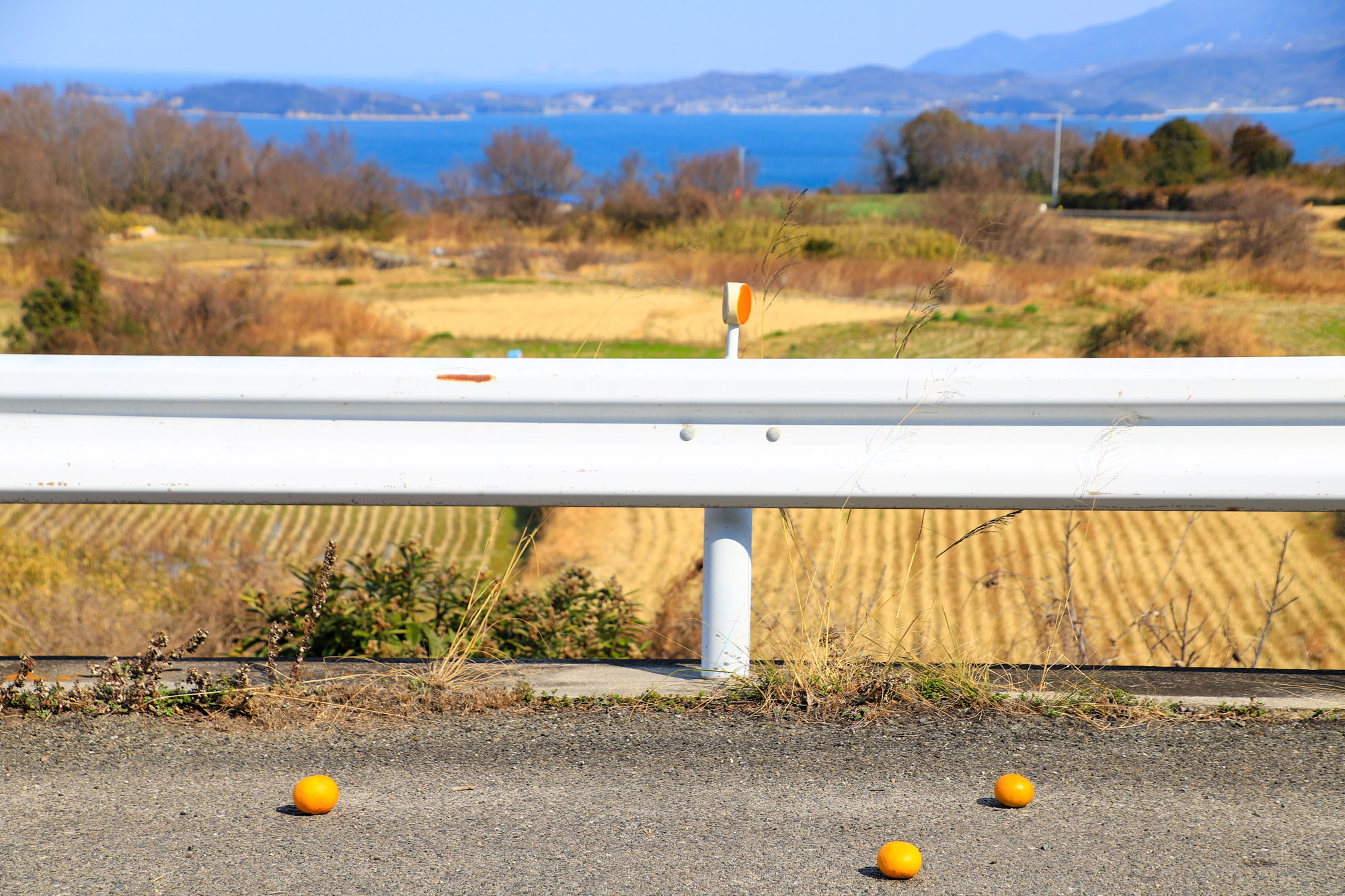 teshima1-44.jpg