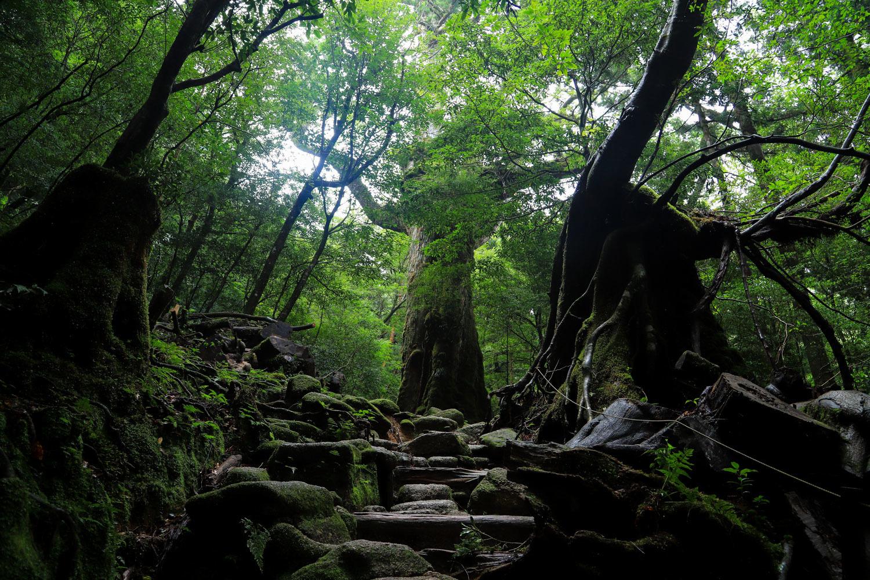 yakushima_tour-17.jpg