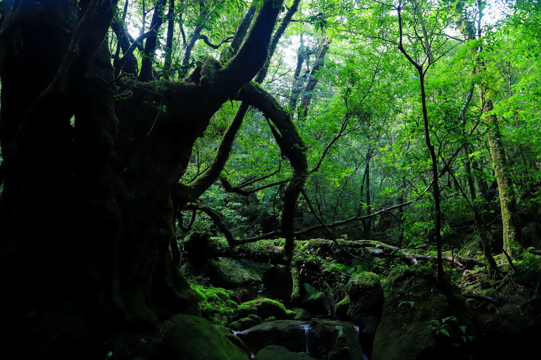 yakushima_tour-18.jpg