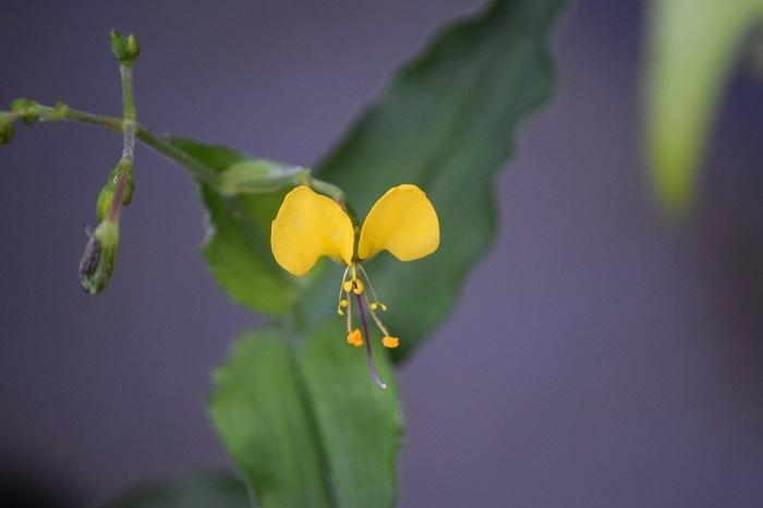 DSC_03112020黄色