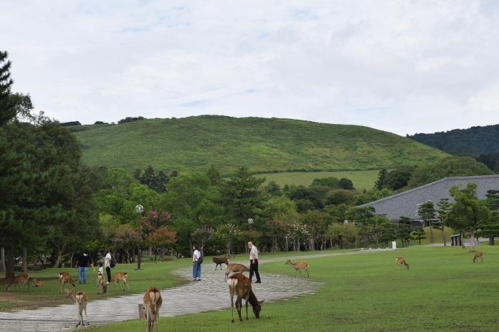 DSC_0570202009奈良公園