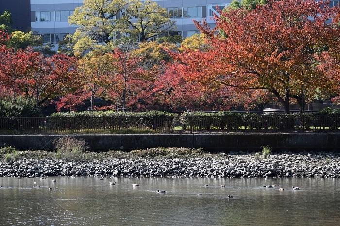 DSC_0599202011大川