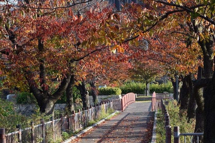 DSC_0679202011大川
