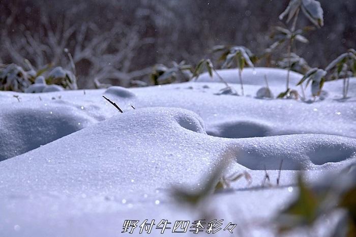 K70_20201227_100746_0雪