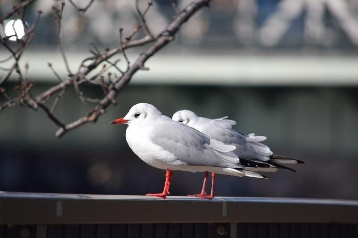 DSC_0232202101鳥