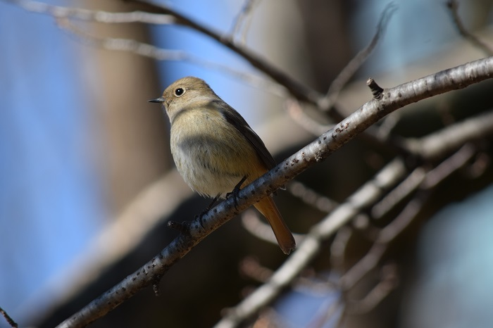 DSC_0319202101鳥