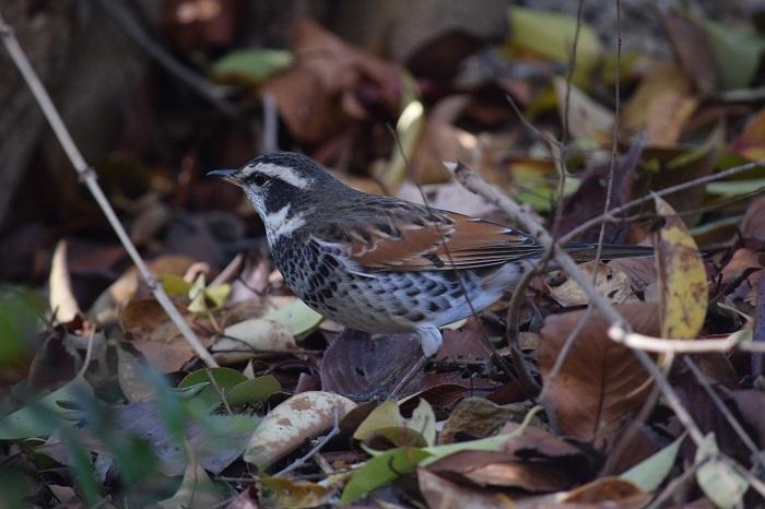 DSC_0330202101鳥