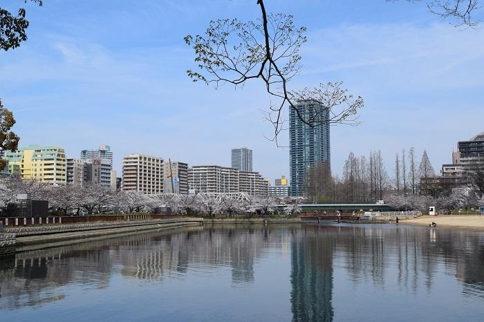 DSC_0410 (2)202103大川さくら
