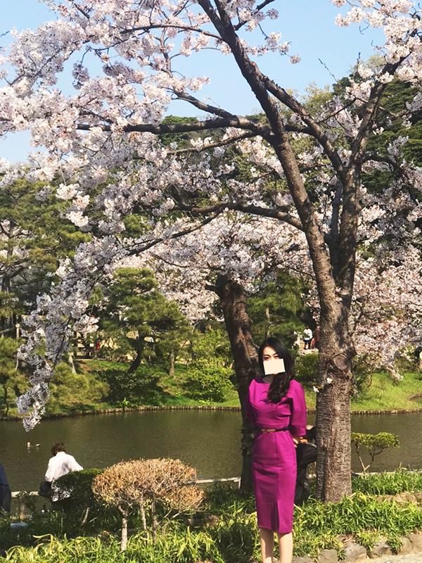 桜の季節三渓園