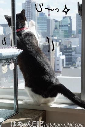 窓辺に座って