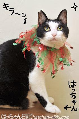 ゴージャスなクリスマスの