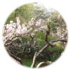 韓国,長興自生樹木園