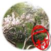 韓国,ソウル,長興自生樹木園